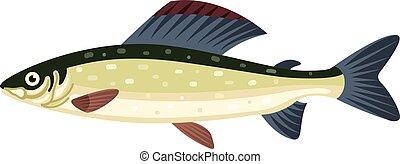 thymallus, saumon, grayling, fish