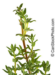 Thyme - Fresh organic thyme herb
