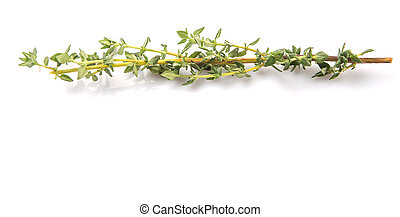 Thyme Herbs Leaves - Thyme herbs leaves over white...