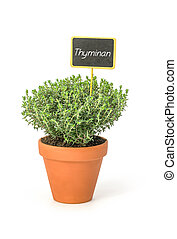 Thyme in a clay pot with a german label Thymian