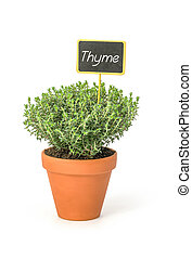 Thyme in a clay pot with a wooden label