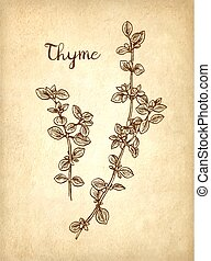 Thyme ink sketch