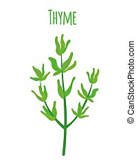 Thyme, organic spice, vegetarian nutrition. Cartoon flat style. Vector illustration