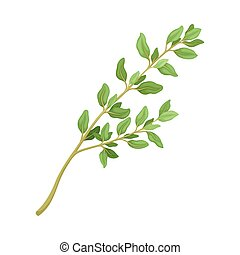 Thyme Twig as Kitchen Herb for Cooking Vector Element