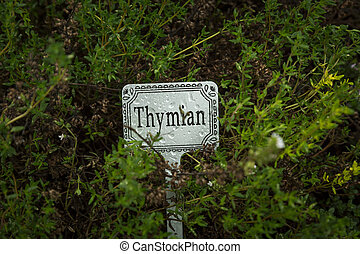 thyme with label
