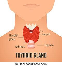 Thyroid gland on a man silhouette - Thyroid gland diagram. ...