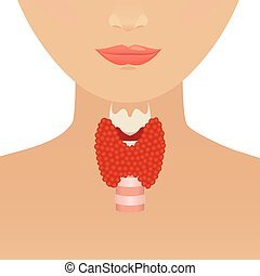 Thyroid gland and trachea shown on a silhouette of a woman. Body anatomy sign. Human endocrine system. Medical internal organ vector illustration.