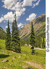 Picturesque view of coniferous trees in Tian-Shan Mountains, Kyrgyzstan