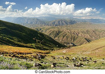 Tian Shan mountains in Kyrgyzstan, panoramic view of steppe with herd of sheeps and goads kyrgyz mountains