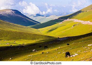 Tianshan Mountain Ranch