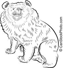 tibetano, bear., seduta