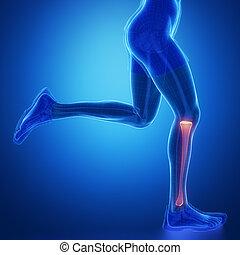 tibia, -, correndo, uomo, gamba, scansione, in, blu