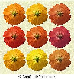 tibio, estacional, flores, en, crema, plano de fondo