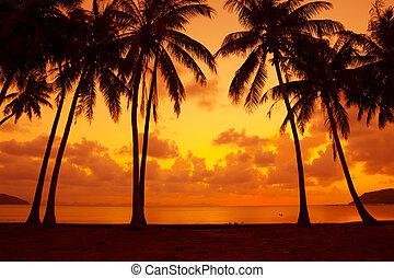 tibio, vívido, tropical, puesta sol océano, orilla, con, árboles de palma