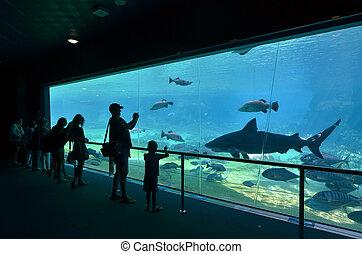 tiburón, australia, oro, bahía, mar, queensland, mundo,...