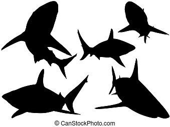 tiburón, blacktip, siluetas, arrecife