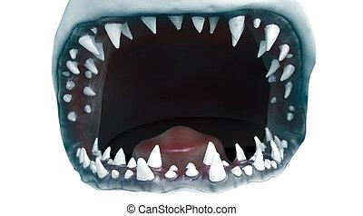 tiburón, boca, dientes, dentado, primer plano, abierto