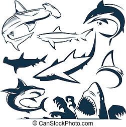 tiburón, colección