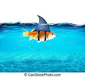 tiburón, concepto, aterrorizar, competición, actuación, ...