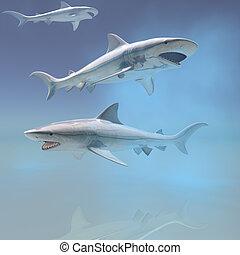 tiburón tigre, natación submarina