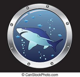 tiburón, vector, portilla