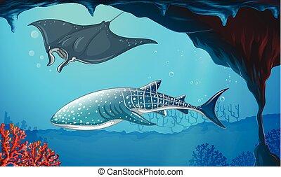 tiburón, y, stingray, el nadar bajo el agua
