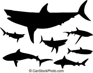tiburones, agua, silueta