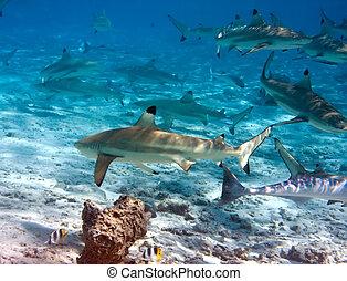 tiburones, encima, océano, arrecife, coral