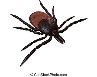 tick - 3d rendered illustration of a tick