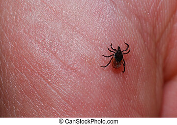 tick on the skin