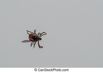 tick on white left