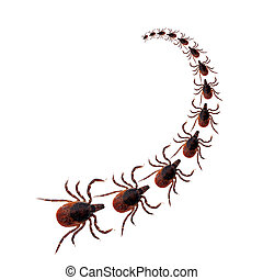 Tick procession, white background - Deer ticks - as commonly...