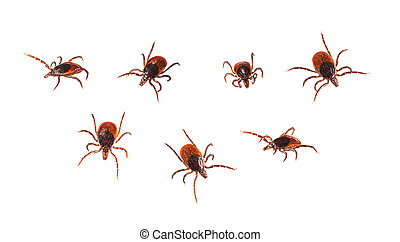 Ticks isolated on white - Ixodida - Ticks in different...