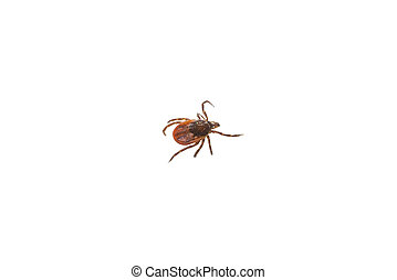 Ticks mites on white background