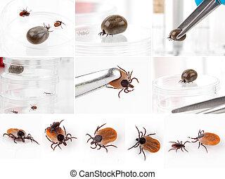 ticks, witte , set, vrijstaand, achtergrond