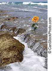 Tidal Flower - tide coming up on an orange ocean flower
