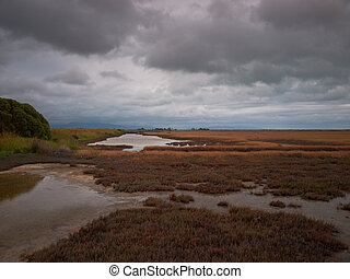 Tidal nature reserve  in cloudy bay new zealand