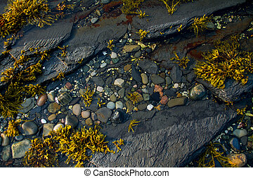 Tidal Pool at Rocky Harbour, Newfoundland, Canada,