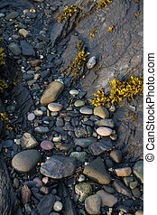 tidal pool on the ocean beach in Rocky Harbour Newfoundland