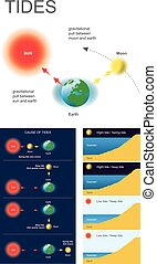 Tides - Gravitational pull between moon and earth,...