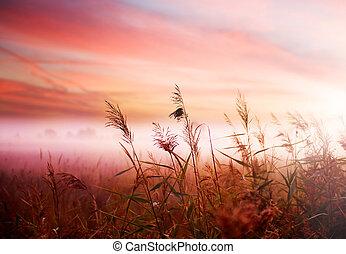 tidligere, tågede, mist, landskab., formiddag