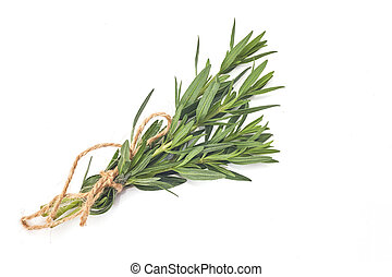 tied fresh rosemary on a white background, aromat herb