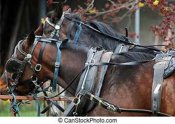 Tied to the hitching post - two horses tied to a hitching ...