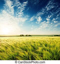 tief, blauer himmel, in, sonnenuntergang, aus, grün, landwirtschaftliches feld
