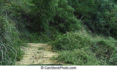 tief, in, der, wälder, andalusien, spanien