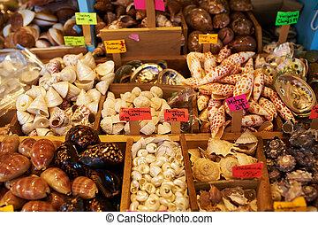 tienda, recuerdo, venta, conchas de mar