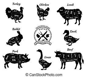 tienda, vew, conjunto, animales, carnicero, esquemático