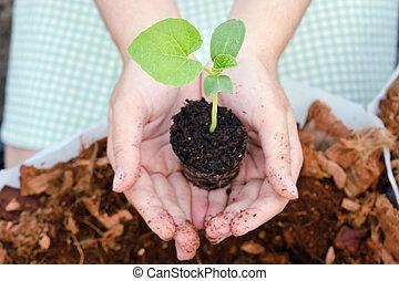 tiener, sapling, tuin, meloen, meisje, grows
