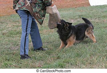 tient, chien policier, cible