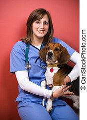 tierärztliche , mit, a, beagle